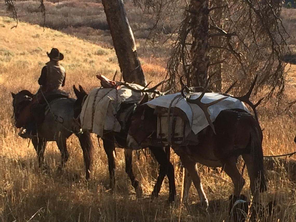 Wyoming Elk Outfitters - Teton Horseback Adventures